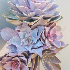 Purples  Ech Afterglow, ech perle von nurnberg, 2x ech purple perle, and a grapptoveria fred ives.  #echeveriapurpleperle #echeveriaperlevonnurnberg #echeveriaafterglow #graptoveriafredives #grapto #echeveria #succulent #succulents