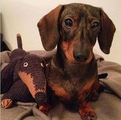 We love getting mail from clients! thank you @tikau #crochet #dachshund