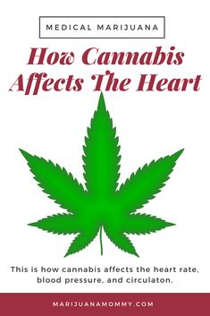 Worried about your heart? This is what you should know about cannabis and cardiac side effects.