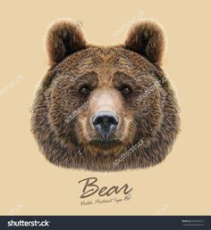 Vector Illustrated Portrait Of Bear On Beige Background. The Head Of An Adult…