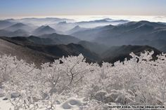 Snow in Taebaek Mountain (태백산 설경).  Skiing!