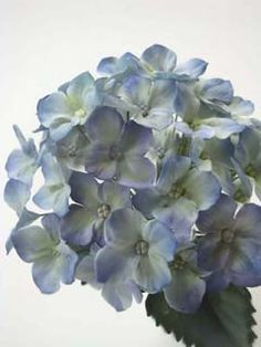 Gum Paste Hydrangeas - Bing Images