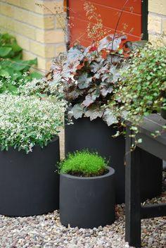 Delar av framsidan just nu Outdoor Pots, Outdoor Gardens, Container Plants, Container Gardening, Diy Jardin, Black Garden, Garden Spaces, Garden Planters, Small Gardens