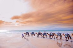 Postcard Perfect: Camels on Cable Beach