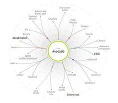 Foodpairing tree - Avocado