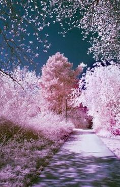 Infrared Pictures Of Outdoor Scenes by Hannes Runelof Will Amaze You (PHOTOS)