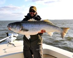 8 Best Fly fishing for striped bass images in 2014 | Flat