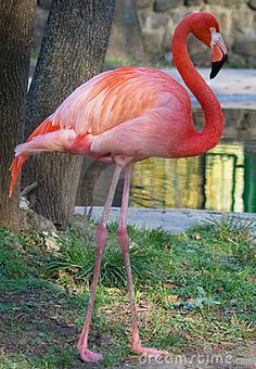 Pink Flamingo by Nerss, via Dreamstime