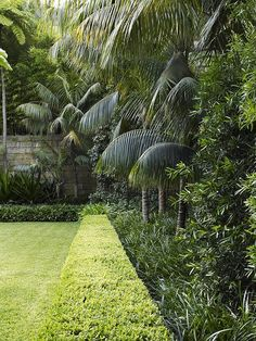 Buxus hedge with mixed planting - formal and tropical garden plants - Tropical Garden Design, Tropical Backyard, Tropical Landscaping, Backyard Landscaping, Tropical Gardens, Hedges Landscaping, Landscaping Melbourne, Modern Backyard, Tropical Plants