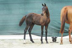 Dutch Warmblood, Warmblood Horses, Dressage Horses For Sale, Horse Breeds, Poses, Animals, Figure Poses, Animales, Animaux