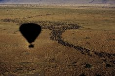 Home to Africa's most famous parks, Tanzania offers a truly unforgeable luxury safari experience; get in touch with an expert to plan your tailor-made trip. Air Ballon, Hot Air Balloon, Kenya Travel, Africa Travel, Safari Holidays, Tanzania Safari, Luxury Camping, African Safari, Amazing Adventures