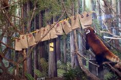 2/27/2012 is Int'l Panda Day. Houston Zoo placed red panda treats in these hanging bags that spelled out Red Panda SOS.