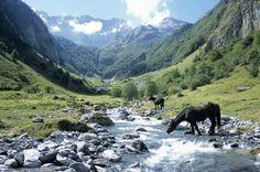 Merens Horse - Pyrénées - France
