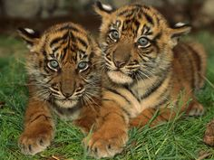 Very Cute Baby Animal | My Dreams...: Cute Baby Animals Pictures & Images...