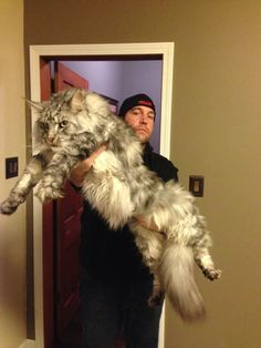 I'm glad my maine coons are smaller...