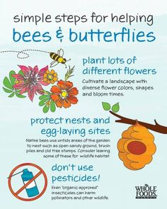 Simple steps for helping bees butterflies