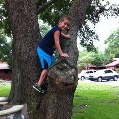 Hunter Monkey climbing a tree.