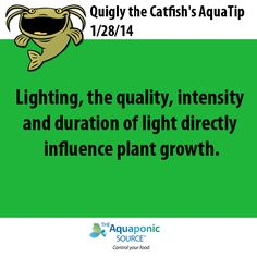 Lighting, the quality, intensity and duration of light directly influence plant growth. #aquaponics