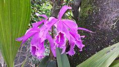 Orquídea Plants, Jewelry, Garden Design, Cute Stuff, Gardens, Cute, Jewellery Making, Jewelery, Jewlery