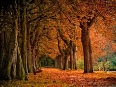 Fall Scenery - Bing Images