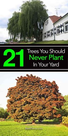 A collection of 21 of the worst trees to plant in your yard or too close to a house. The problem trees are weak, have invasive roots, and are messy [MORE]