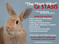 Silent killer GI stasis With the great shed upon many of us, this is a great reminder about the silent killer GI stasis and how it can happen if your bun ingests too much hair. Read more about GI stasis, the signs, and emergency treatment here: http://www.rabbitnetwork.org/articles/gistasis.shtml Remember, if you think your bun has any of those signs, head to a vet immediately!!!  https://www.facebook.com/photo.php?fbid=10151882810576574&set=a.424833066573.205328.74421436573&type=1&theater