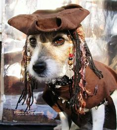 I would sale the seas in this very cute Jack Sparrow costume! Lets find a map and search for the nearest treasure! For more Halloween costumes for dogs visit my dog blog post: https://chilliwawa.com/top-10-halloween-costumes-for-dogs/