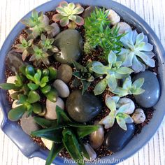 Create a beautiful indoor succulent rock garden for your table. Tutorial on  Houseful of Handmade