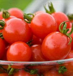 Bellstar Organic Tomato Seed Northern favorite.  Long established with short-season customers as a favorite early plum, fresh or processed. The medium-sized, avg. 4 oz., square-round red fruits are jointless (pick without stems) and easy to harvest.