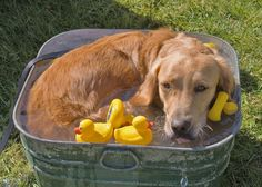The rubber duckies are MINE! If you know where that quote came from -- you're a boomer.