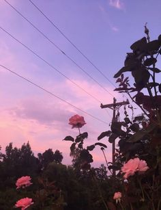 Nature Aesthetic, Flower Aesthetic, Purple Aesthetic, Aesthetic Grunge, Aesthetic Drawing, Aesthetic Vintage, Summer Aesthetic, Aesthetic Anime, Aesthetic Backgrounds