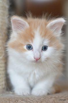 catycat21:Mýrar Siggi by Sirrush on Flickr.