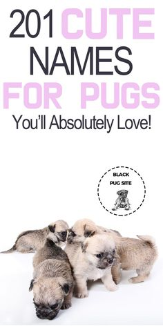 Check out this list of cute dog names you'll love for your Puppy. Find dog names for girls, boys, food names, and even Disney names. Girl Pug Names, Pet Names For Girls, Cute Girl Puppy Names, Cute Female Dog Names, Puppies Names Female, Black Dog Names, Corgi Names, Cute Names For Dogs, Dog Names Disney
