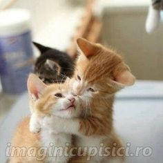 Imagini pentru pisici dragute