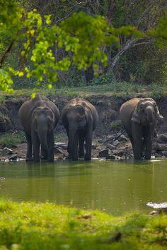 Elephants in Kabini Forest_ India