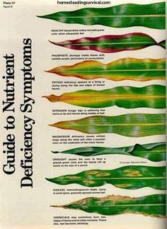 Guide To Nutrition Deficiency Symptoms In Plants