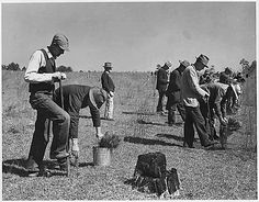 Civilian Conservation Corps planting during the Great Depression