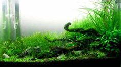 crystal red shrimp aquarium plants