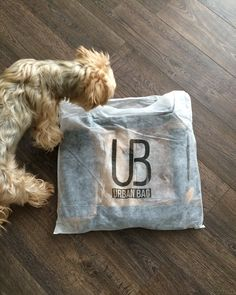 Oare pentru mine este cadoul?!? From Alena Untermayer - Slovacia www.urbanbag.ro #UrbanBag #Rucsac #RucsacUrbanBag #RucsacPiele #Backpack #UrbanBagBackpack #dog #present #gift #PrietenUrbanBag Urban Bags, Dubrovnik, Backpacks, Throw Pillows, Dogs, Casual, Toss Pillows, Decorative Pillows, Decor Pillows