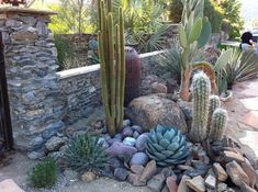 Rustically charming cacti entrance mound with opuntia, cact and agaves. Photo: unknown. #SerraGardens_agaves #agave_parryi #agave_schottii