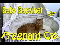 Bassinet for Pregnant Kitty Cat, Athena