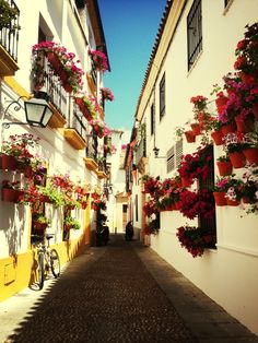 A beautiful place to visit during Patios festival in Cordoba! Beautiful Places To Visit, Wonderful Places, Spanish Patio, Cordoba Andalucia, Portuguese Culture, Puerto Banus, One Day Trip, Lawns, Walkways