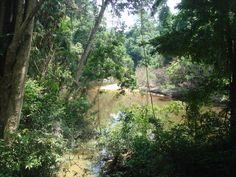 TAMAN NEGARA - Lost in the Jungle
