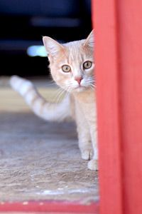 On the blog: We're celebrating a big win for Arizona's community cats! Learn more about newly passed legislation that will pave the way for progressive programs for the state's stray and free-roaming cats. Together, we can Save Them All.