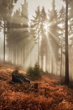 In the autumn forest by Daniel Řeřicha on 500px