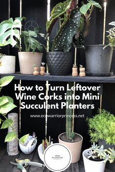 How to Turn Leftover Wine Corks into Mini Succulent Planters Sustainable Wedding, Sustainable Living, Succulent Planters, Succulents, Leftover Wine, Plant Diseases, Wine Corks, Warrior Princess, Growing Herbs