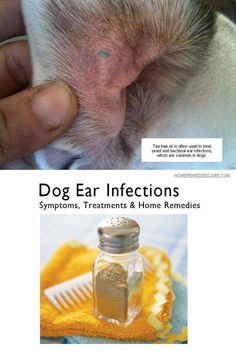 Home Remedies Care — 13 Home Remedies for Dog Ear Infection – Symptoms...