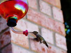 Love my hummingbirds
