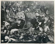 WWII German Shepherd Devil Dog Caesar of 1st Marine War Dog Platoon Press Photo