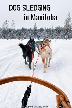 Promenade Architecturale, Alaska, Pvt Canada, Husky, Dogs, Fear Of Dogs, Cross Country Skiing, Animaux, Pet Dogs